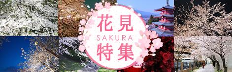 お花見特集2017