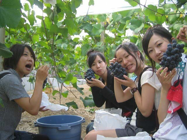 大粒の甘いブドウを存分に楽しもう